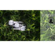 Naledi – Authentic & Genuine